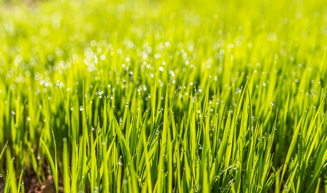 How To Have An Organic And Natural Lawn